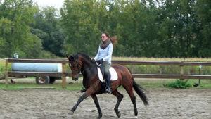 Equi-mam - coach equestre- valorisation